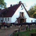 Irene Dairy Farm
