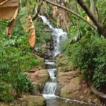 Profile: Pretoria National Botanical Garden