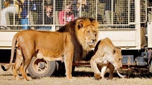 Lion Park Lanseria 3