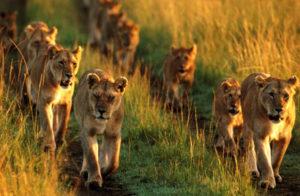 pilanesberg-national-park