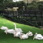 Montecasino Bird Gardens