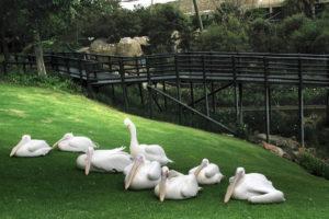 Monte Casino Bird Garden