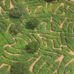 Honeydew 'A-maize-ing' Mazes