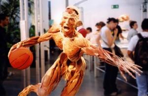 Body-Worlds-300x195