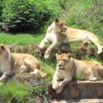 National Zoological Garden