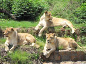 national-zoological-garden
