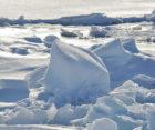 Our Arctic Future