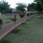 Profile: Rose Park
