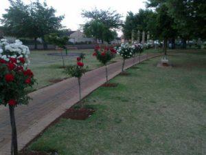 profile_rose-park