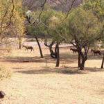 Profile: Rietfontein Nature Reserve