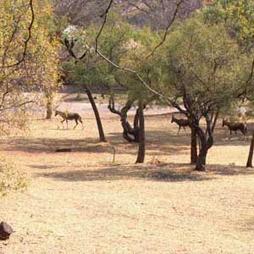 rietfontein-nature-reserve
