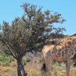 Rietfontein Nature Reserve