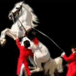 Lipizzaners: Sunday Shows