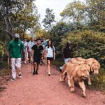 Guided Bush Walk with Lions