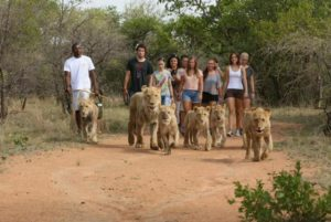 Ukutula Lodge Bush Walk with the Lions