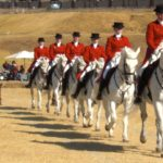 The South African Lipizzaners Wish Upon A Star