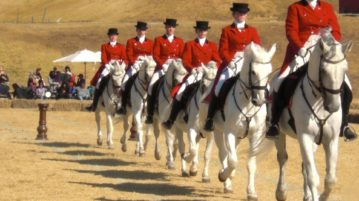Lipizzaners Wish Upon A Star