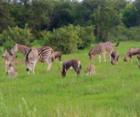 Magalies Wild Farm Hike