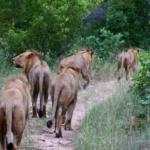 WildEarth safariLIVE