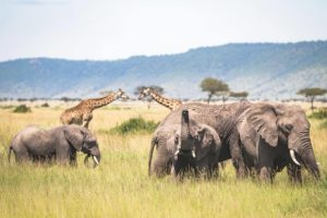 live stream game drives