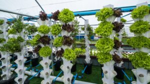 Online Commercial Aquaponics Training